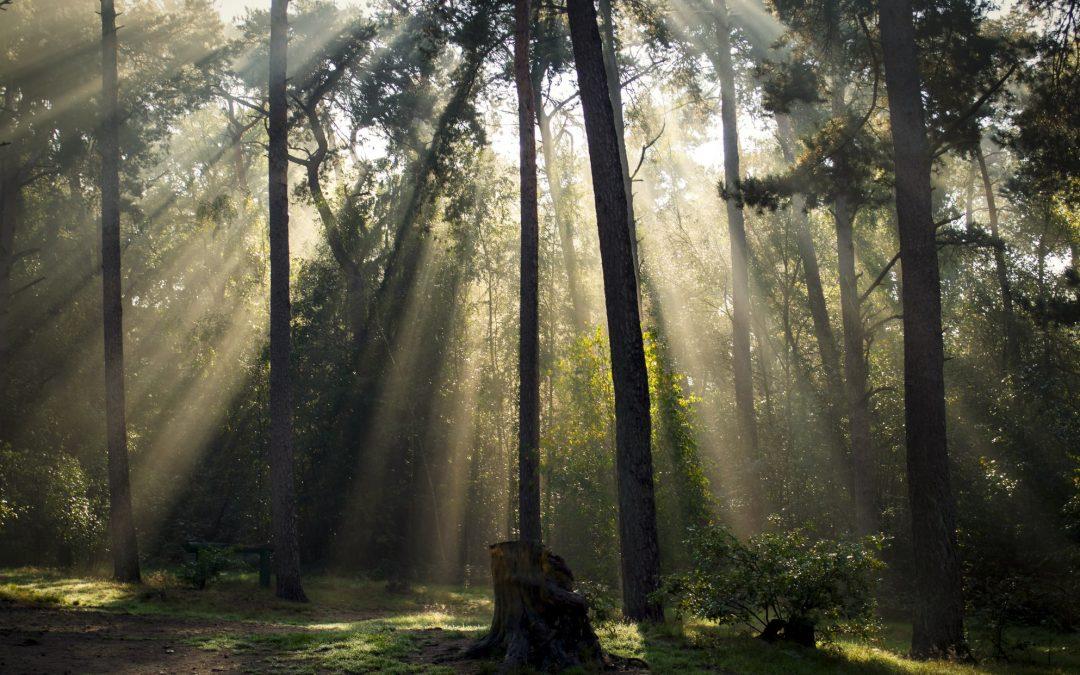 Dinacharya – The morning rituals with Ayurveda